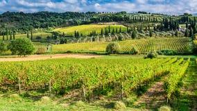 Vinhedo perto de Montalcino em Toscânia imagens de stock royalty free