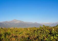 Vinhedo perto de Santiago de Chile foto de stock royalty free