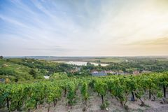 Vinhedo sobre Rollsdorf na terra de Mansfelder foto de stock royalty free