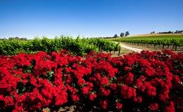 Vinhedo vermelho da flor Imagens de Stock