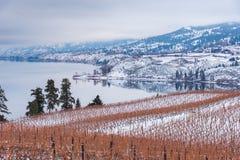 Vinhedos cobertos de neve, lago, e montanhas Fotografia de Stock