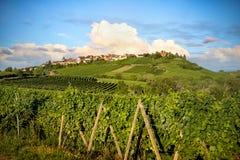 Vinhedos da paisagem da rota do vinho França, Alsácia imagens de stock royalty free