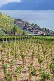 Vinhedos da região de Lavaux no lago Leman imagens de stock royalty free