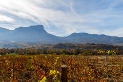 Vinhedos de Alsácia em França outono Vista lateral fotografia de stock