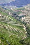 Vinhedos de Douro - vinho portuário, Porto, Portugal Fotos de Stock Royalty Free