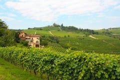 Vinhedos de Langhe em Italy Foto de Stock Royalty Free