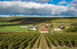 Vinhedos de Loire Valley, França imagens de stock