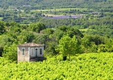 Vinhedos de Provence e campos da alfazema fotografia de stock royalty free