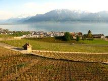 Vinhedos de Vevey Switzerland Fotos de Stock Royalty Free