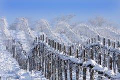 Vinhedos do inverno imagem de stock