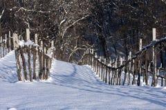 Vinhedos do inverno imagens de stock