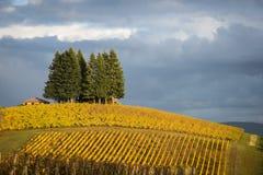 Vinhedos do outono, vale de Willamette, Oregon Imagens de Stock