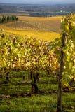Vinhedos do outono, vale de Willamette, Oregon imagens de stock royalty free