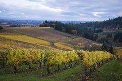 Vinhedos do outono, vale de Willamette, Oregon Foto de Stock Royalty Free