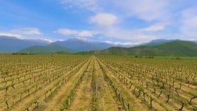 Vinhedos do vale de Alazani, tradição da fatura de vinho em Geórgia, bens da exportação vídeos de arquivo