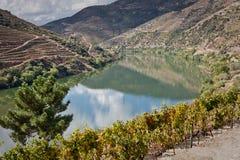 Vinhedos do vale de Douro, Portugal Imagem de Stock