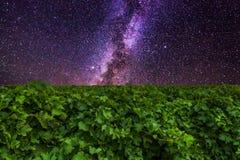Vinhedos e montanhas o no fundo de céu estrelado surpreendente Imagem de Stock Royalty Free