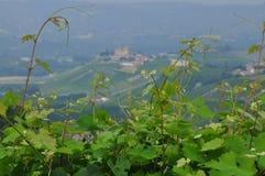 Vinhedos e montes da região de Langhe Piemonte, Itália Imagens de Stock