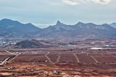 Vinhedos e o cume Karadag da montanha Foto de Stock