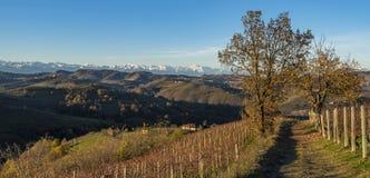 Vinhedos em Diano d 'alba em Piedmont fotos de stock