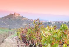 Vinhedos em La Rioja, Spain foto de stock