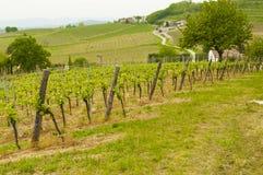 Vinhedos em montes de Euganean, Vêneto, Itália durante a mola Foto de Stock Royalty Free