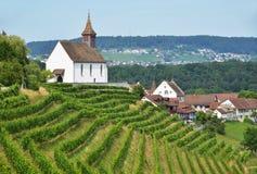 Vinhedos em Rheinau, Suíça Fotografia de Stock Royalty Free