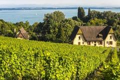 Vinhedos em Suíça Fotos de Stock Royalty Free