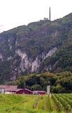 Vinhedos em Switzerland Fotos de Stock