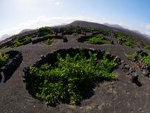 Vinhedos famosos do La Geria na ilha vulcânica de Lanzarote do solo Imagens de Stock