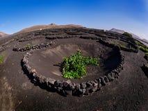 Vinhedos famosos do La Geria na ilha vulcânica de Lanzarote do solo Fotos de Stock Royalty Free