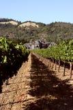 Vinhedos idílico com a casa do vinery do victorian Fotografia de Stock