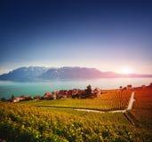 Vinhedos na área de Lavaux, Suíça Imagens de Stock