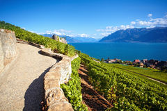 Vinhedos na área de Lavaux, Suíça Fotos de Stock Royalty Free