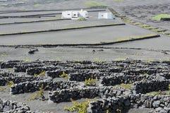 Balance paredes dos vinhedos no vale de Geria do La, ilha de Lanzarote, Ca Imagem de Stock