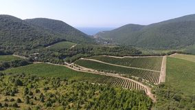 Vinhedos nas montanhas de Abrau-Dyurso video estoque