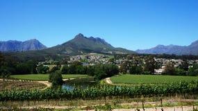 Vinhedos no cabo ocidental, África do Sul Imagem de Stock
