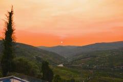 Vinhedos no Douro River Valley entre Peso de Regua e Pinhao, Portugal imagem de stock royalty free