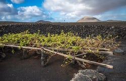Vinhedos no La Geria, Lanzarote, Ilhas Canárias, Espanha fotografia de stock royalty free