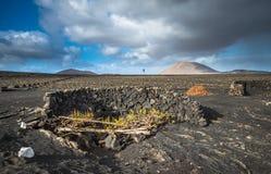 Vinhedos no La Geria, Lanzarote, Ilhas Canárias, Espanha imagens de stock