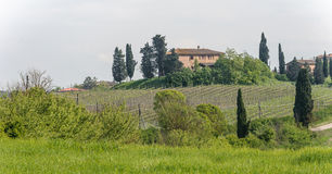 Vinhedos no monte de Tuscan Foto de Stock