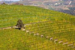 Vinhedos no monte em Piedmont, Itália Fotografia de Stock Royalty Free