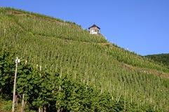 Vinhedos no Moselle e na casa metade-suportada Imagens de Stock