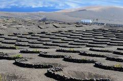 Vinhedos no vale de Geria do La, ilha de Lanzarote, Ilhas Canárias, fotos de stock royalty free