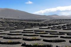 Vinhedos no vale de Geria do La, ilha de Lanzarote, Ilhas Canárias, foto de stock