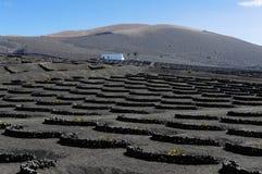 Vinhedos no vale de Geria do La, ilha de Lanzarote, Ilhas Canárias, fotografia de stock royalty free