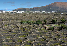 Vinhedos no vale de Geria do La, ilha de Lanzarote, Ilhas Canárias, Foto de Stock Royalty Free