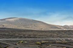 Vinhedos no vale de Geria do La, ilha de Lanzarote, Ilhas Canárias, imagens de stock royalty free