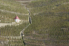 Vinhedos no vale do norte de Rhone Imagem de Stock Royalty Free