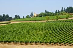 Vinhedos no vale Oregon de Willamette imagem de stock